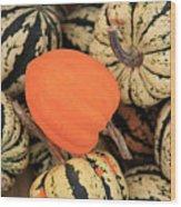 Organic Pumpkins Wood Print by Wendy Connett
