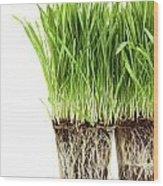 Organic Wheat Grass On White Wood Print