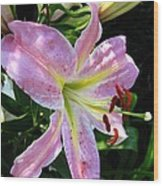 Oriental Lily Named Tom Pouce Wood Print
