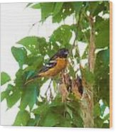 Oriole And Babies Wood Print