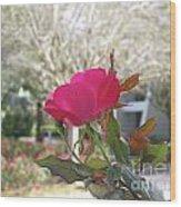 Orlando Rose Wood Print