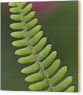 Ornamental Fern Wood Print