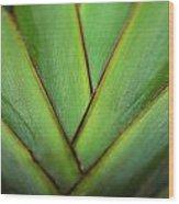 Ornamental Palm Detail Wood Print