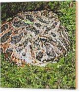 Ornate Horned Frog Wood Print