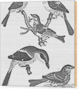Ornithology, 19th Century Wood Print