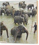 Orphaned Elephants Wood Print