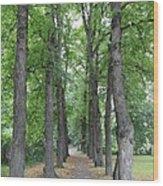 Oslo Trees Wood Print