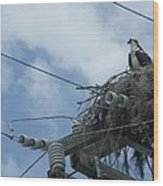 Osprey And Song Bird Wood Print