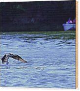 Osprey Cleaning The Lake  Wood Print