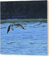 Osprey Environmentalist Wood Print