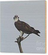 Osprey Glare Wood Print by Lynda Dawson-Youngclaus