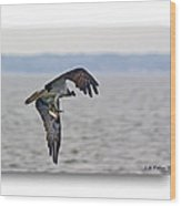 Osprey Grab Wood Print