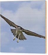 Osprey In Flight Two Wood Print