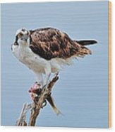Osprey In The Morning Wood Print