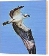Osprey Inflight Wood Print