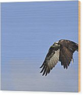 Osprey On The Move Wood Print