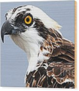 Osprey Profile Wood Print