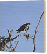 Osprey with Catch I Wood Print
