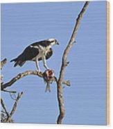 Osprey With Catch II Wood Print
