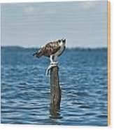 Osprey With Catch. Wood Print