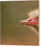 Ostrich Eye Wood Print