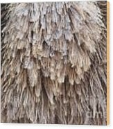Ostrich Fluff Wood Print