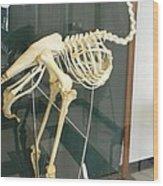 Ostrich Skeleton Wood Print