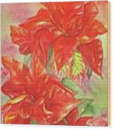 Other Poinsettia Wood Print