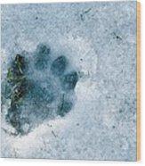 Otter Footprint In Snow Wood Print