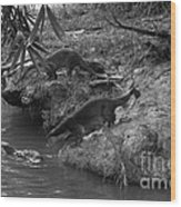 Otters  Wood Print