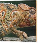 Oustalets Chameleon Furcifer Oustaleti Wood Print