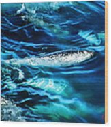 Out Fishing  Wood Print