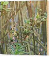 Out On The Pond Wood Print