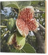 Over-ripe Figs On A Tree Wood Print