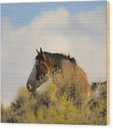 Over The Hill Pinto Wood Print