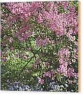 Overgrown Natural Beauty Wood Print