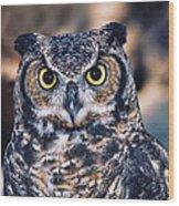 Owl 2 Wood Print