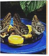 Owl Butterflies Wood Print