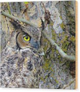 Owl Eye Wood Print