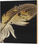 Owl Feather With Water Wood Print