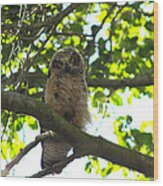 Owl In Central Park Wood Print