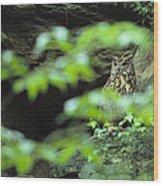 Owl In Woodland, Sachsische Schweiz Wood Print