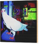 Owl Pigeon Wood Print