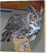Owl Together Now Wood Print by LeeAnn McLaneGoetz McLaneGoetzStudioLLCcom