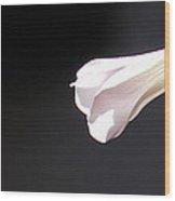 Oxalis Bud Wood Print