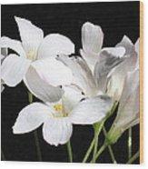 Oxalis Flowers 2 Wood Print