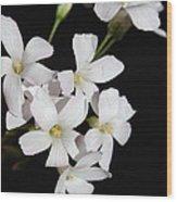 Oxalis Flowers 3 Wood Print