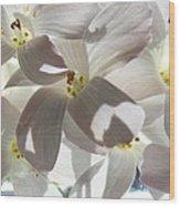 Oxalis Flowers Wood Print