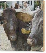 Oxen Pair Wood Print