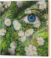 Oxeye Daisy Wood Print